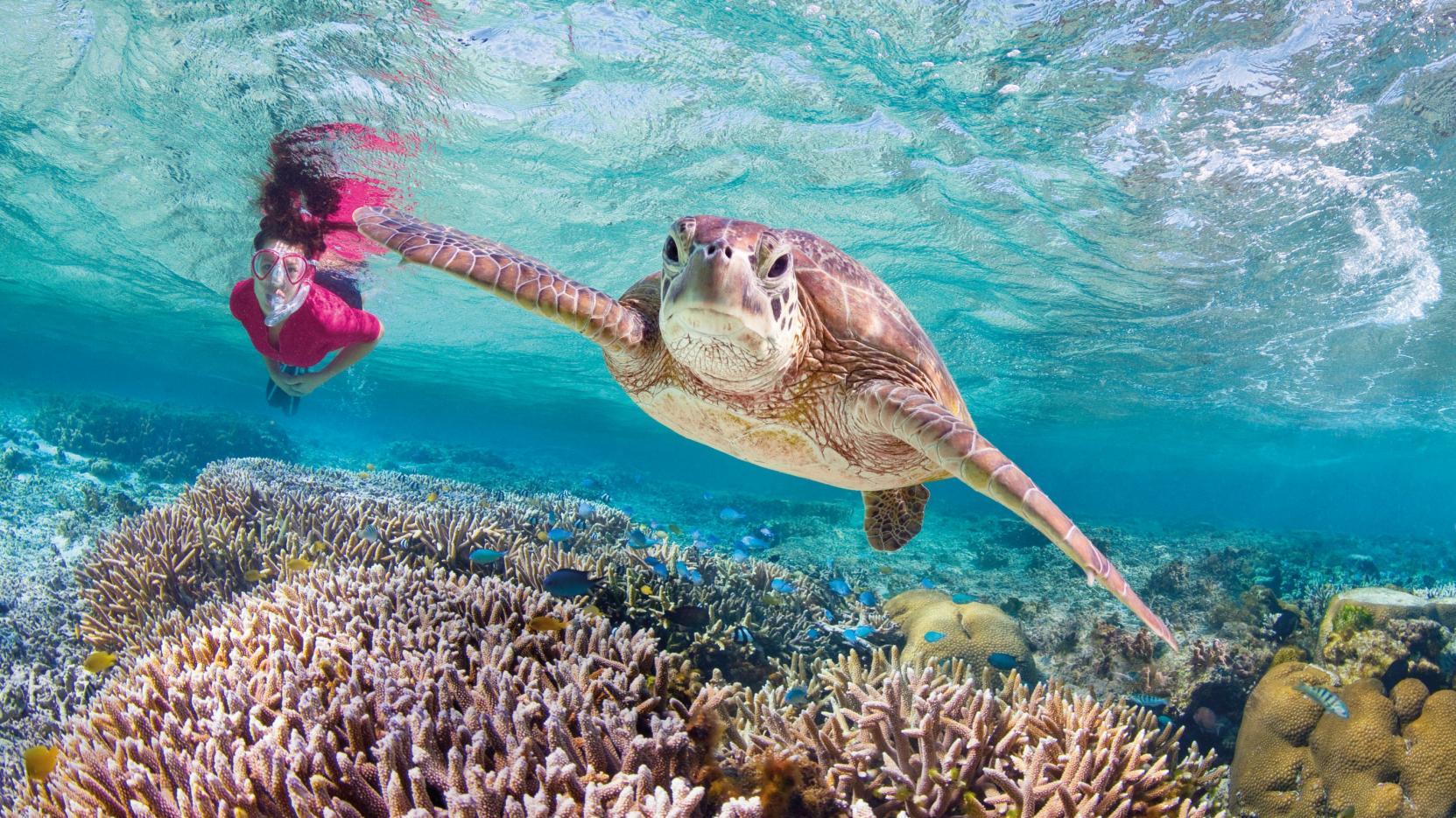 oceanquest excursion tour croisière plongée snorkeling bateau grande barrière