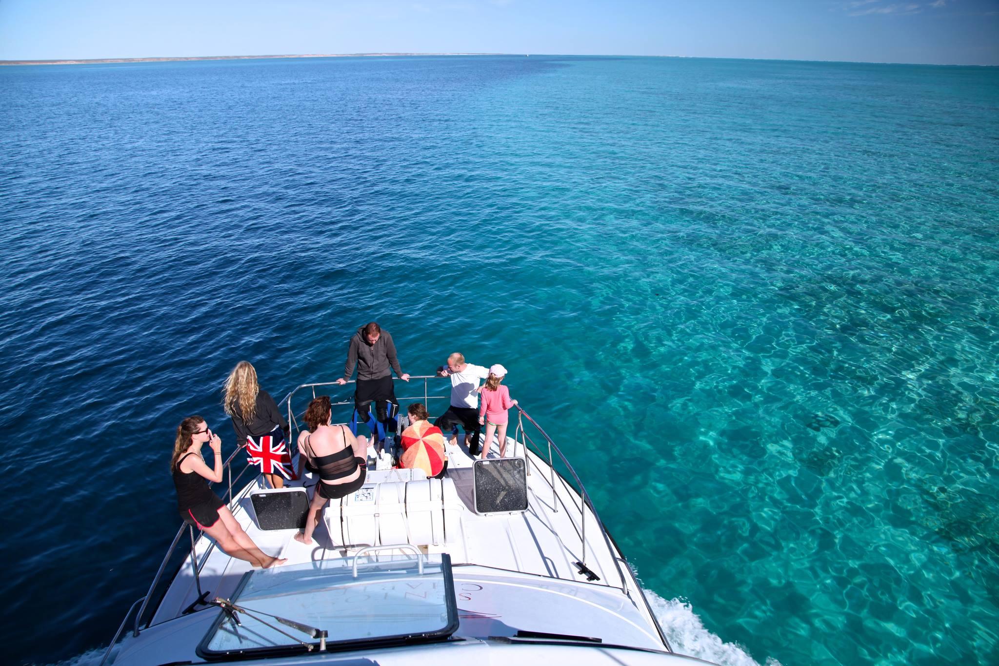 baleines a bosse coral bay plongee