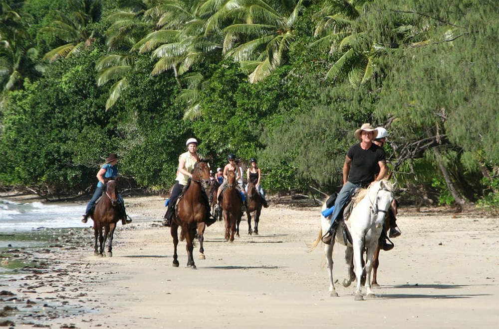 go wild cape tribulation