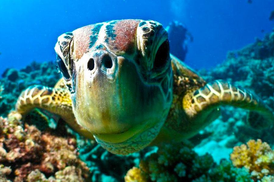 plongee snorkeling grande barriere