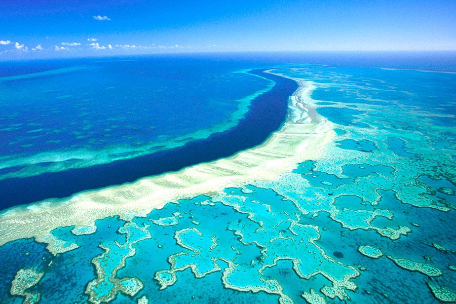 Snorkeling grande barrière